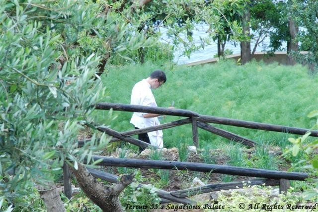 Caesar Augustus - In the herb garden, hmm what's for dinner???