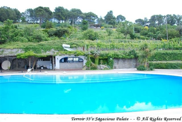 The vineyards overlooking the pool