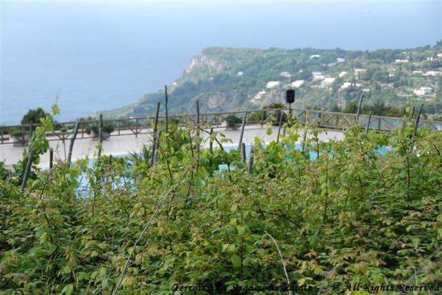Me overlooking the vineyards, overlooking the pool,overlooking the bay.