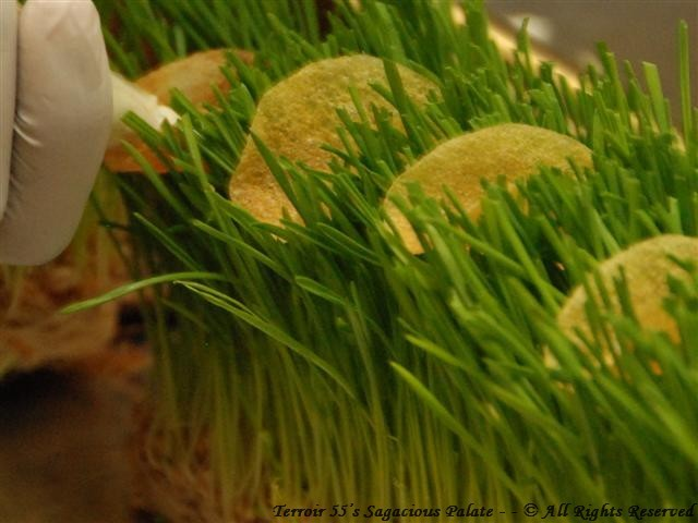 Caviar Tacos nestled in wheatgrass