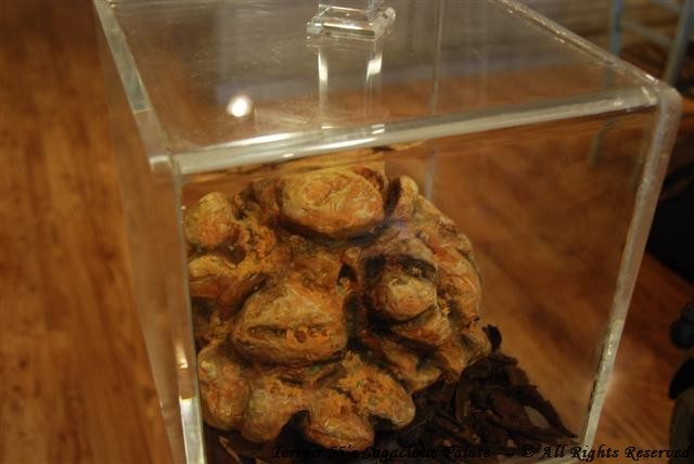 Replica of the 2.13 lb truffle