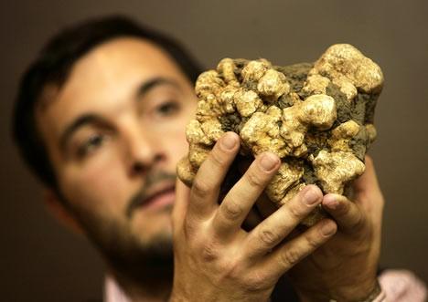 Cristiano Savini holding the 2.13 pound white truffle - Photo by Andrew Medichini