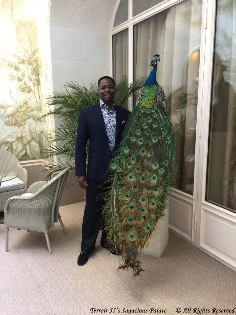 Peacocks - Le Bristol